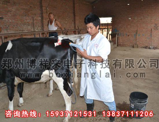 牛用B超对奶牛的检测